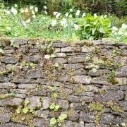 170503_Malmesbury-Gardens_018