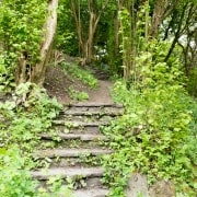 170503_Malmesbury-Gardens_020