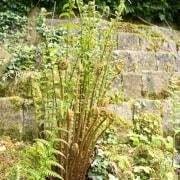 170503_Malmesbury-Gardens_041