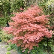 170503_Malmesbury-Gardens_045